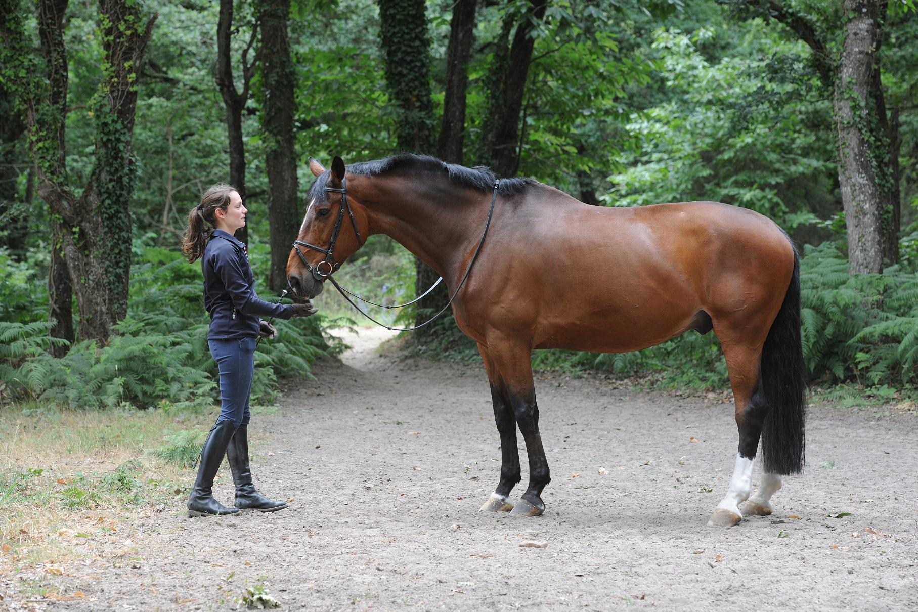 Condition physique du cavalier (2) : mode d'emploi