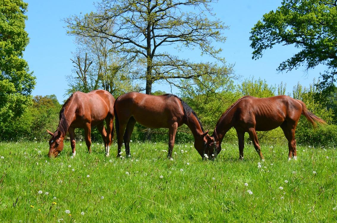 Les indicateurs de bien-être du cheval au repos