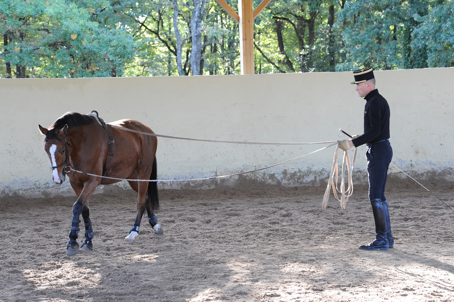 Education du jeune cheval
