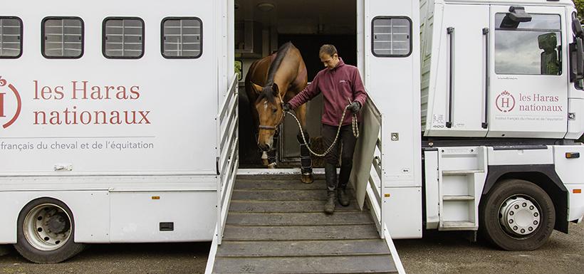 Impacts du transport sur le bien-être du cheval