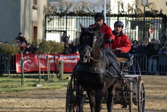 Comprendre la locomotion du cheval d'attelage