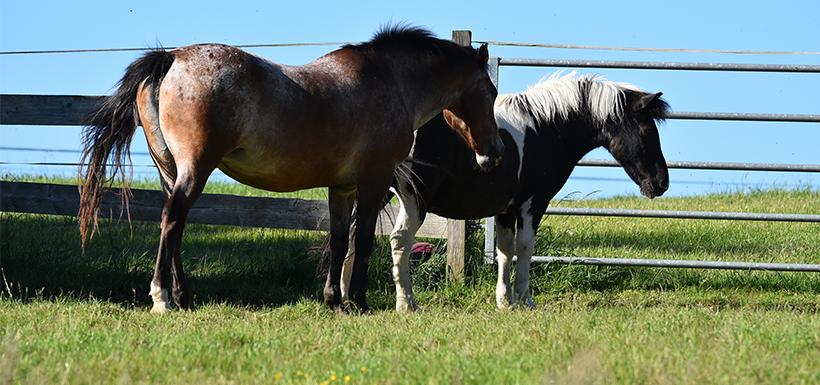 Gestion des prairies pour chevaux