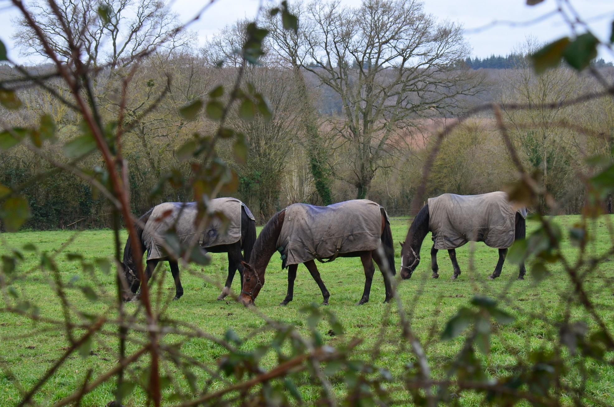 Des caméras pour protéger les chevaux ?