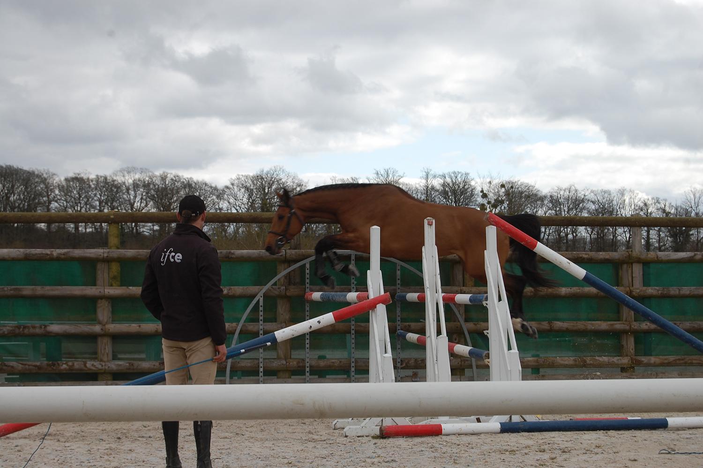 Concours d'élevage et valorisation : présenter son cheval à l'obstacle