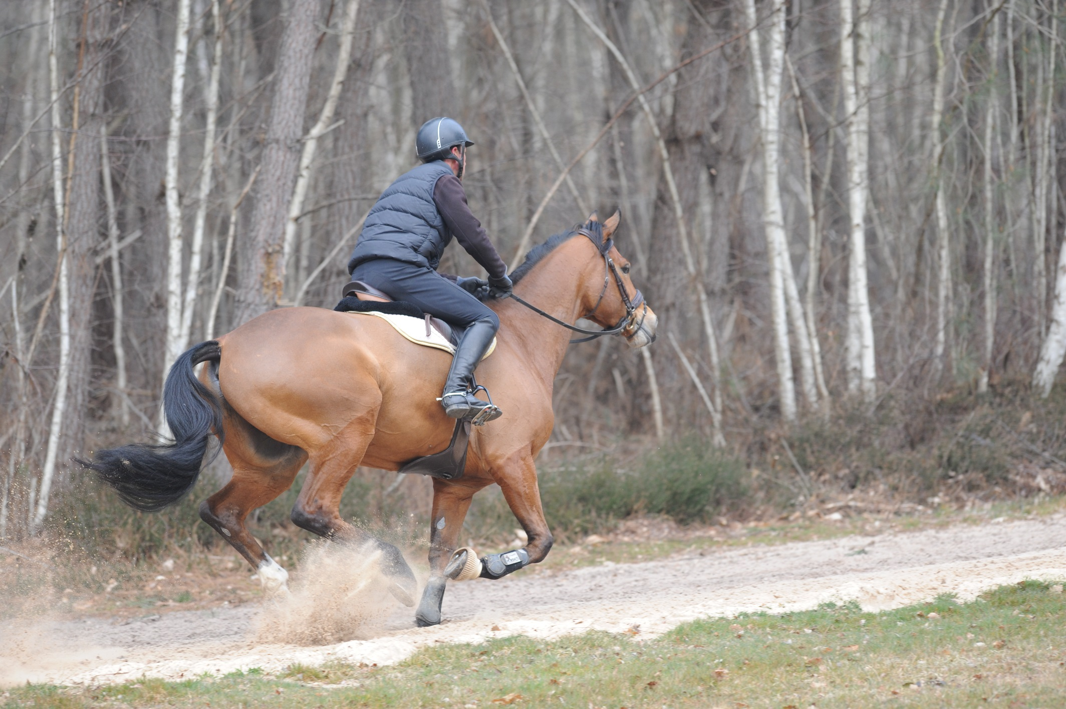 Evaluer la condition physique de son cheval