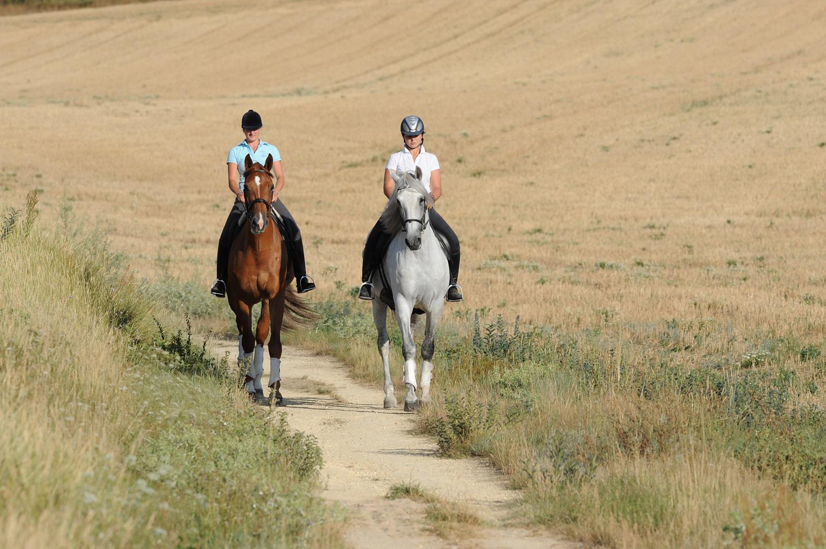 Tempérament et utilisation du cheval