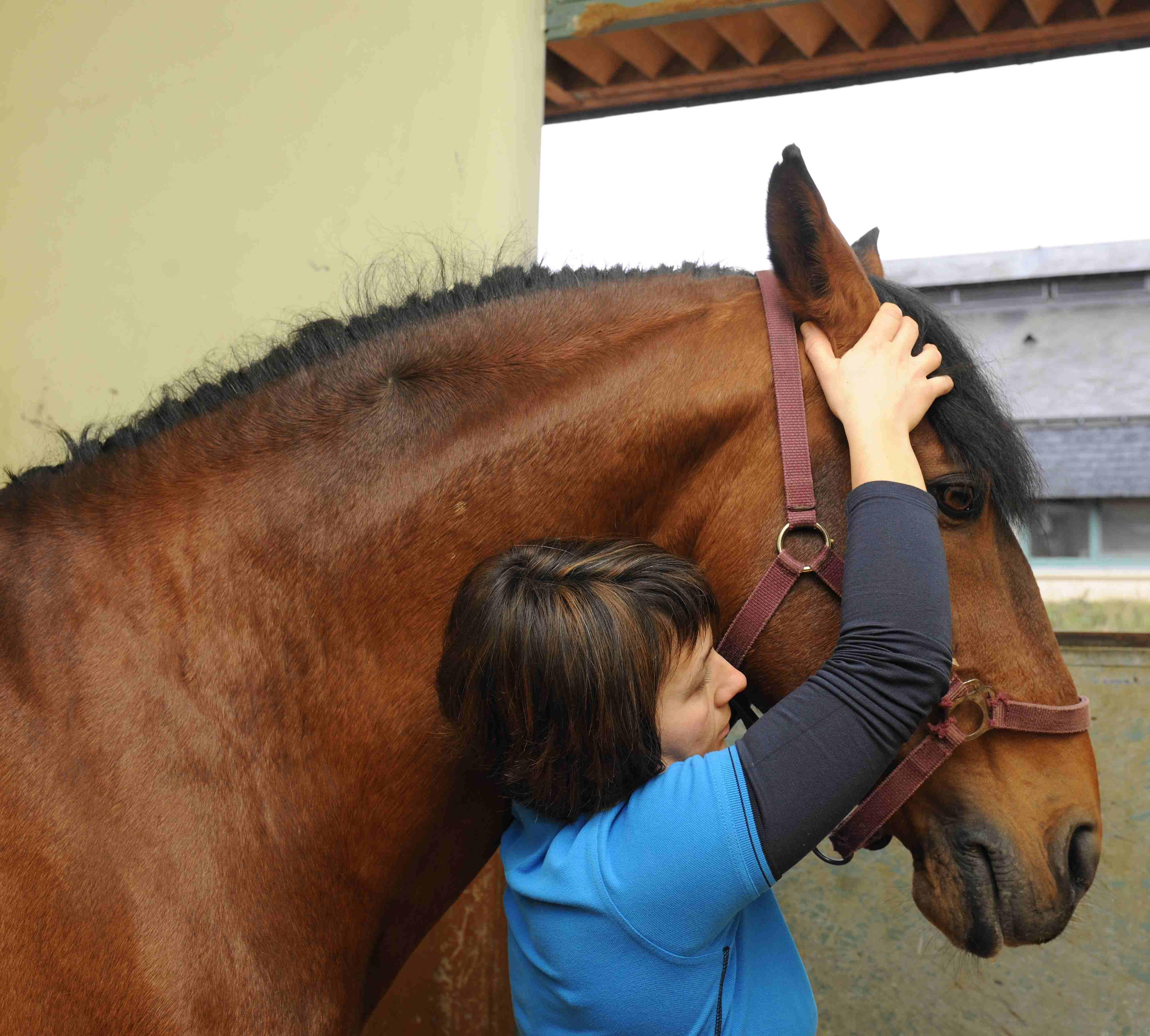 Prise en charge ostéopathique en équitation