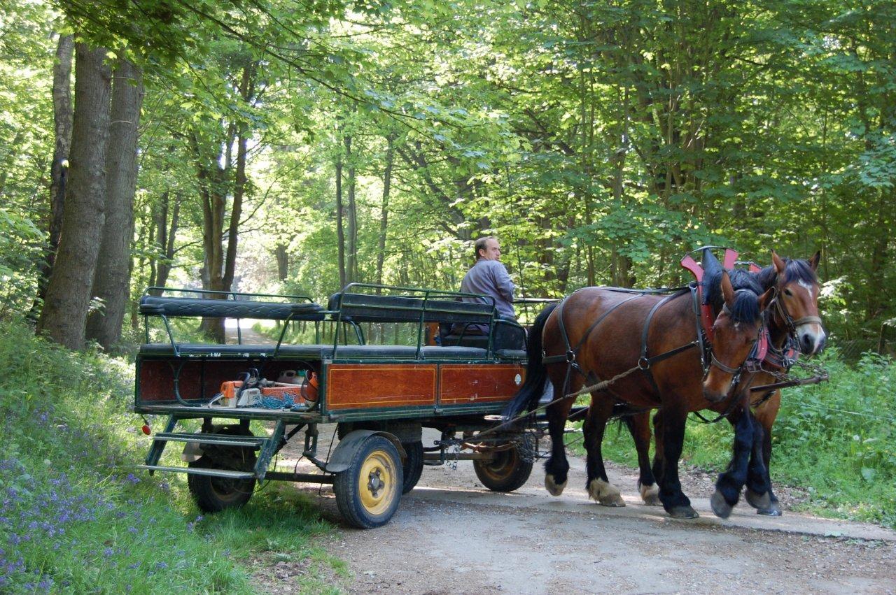 Utilisations du cheval utilitaire en zone rurale