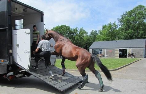Sécurité autour du cheval