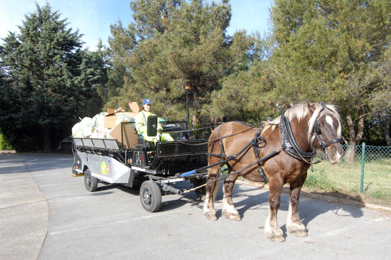 Utilisations du cheval utilitaire en zone urbaine