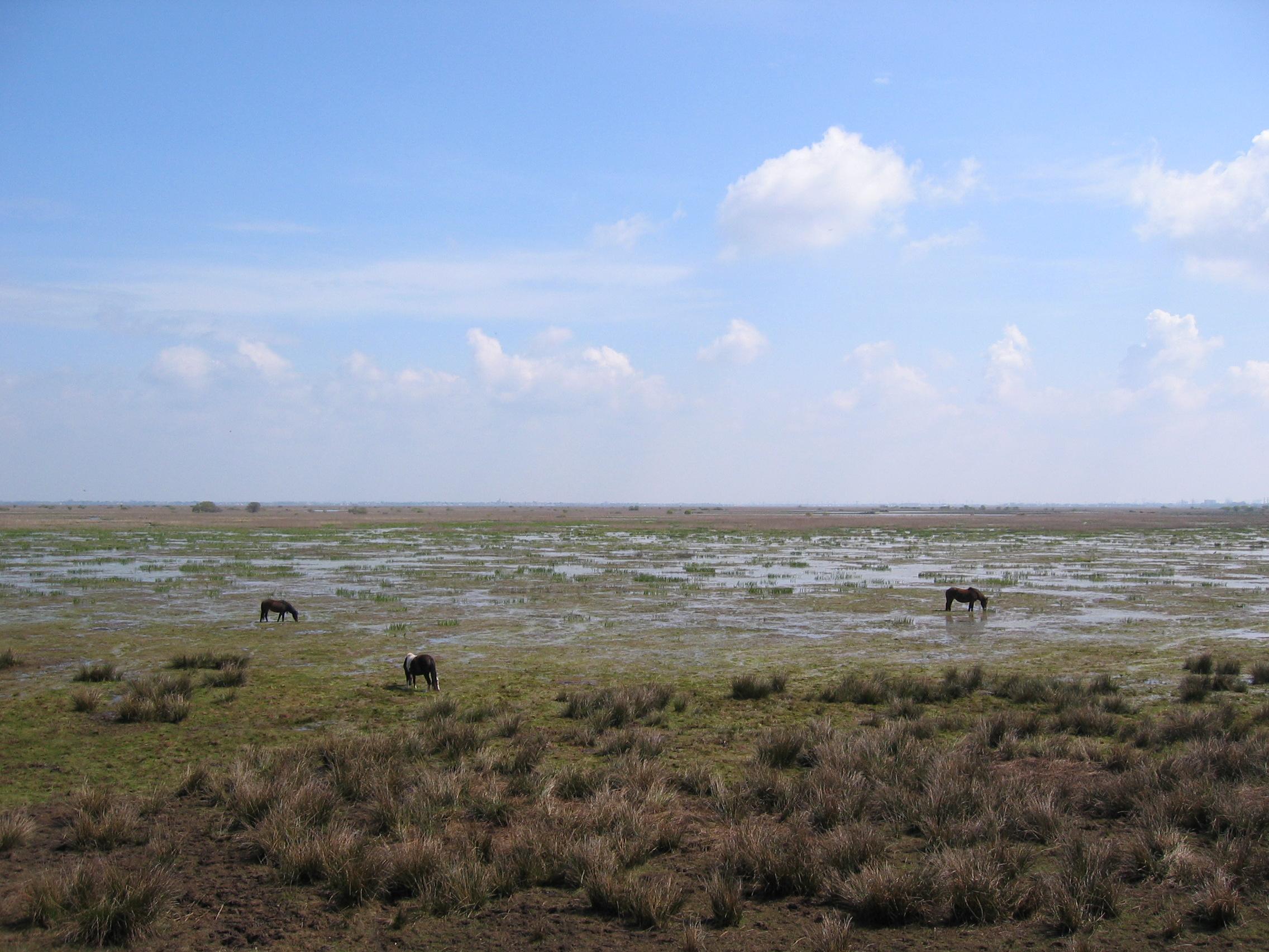 Effet de l'environnement sur le pied du cheval sauvage