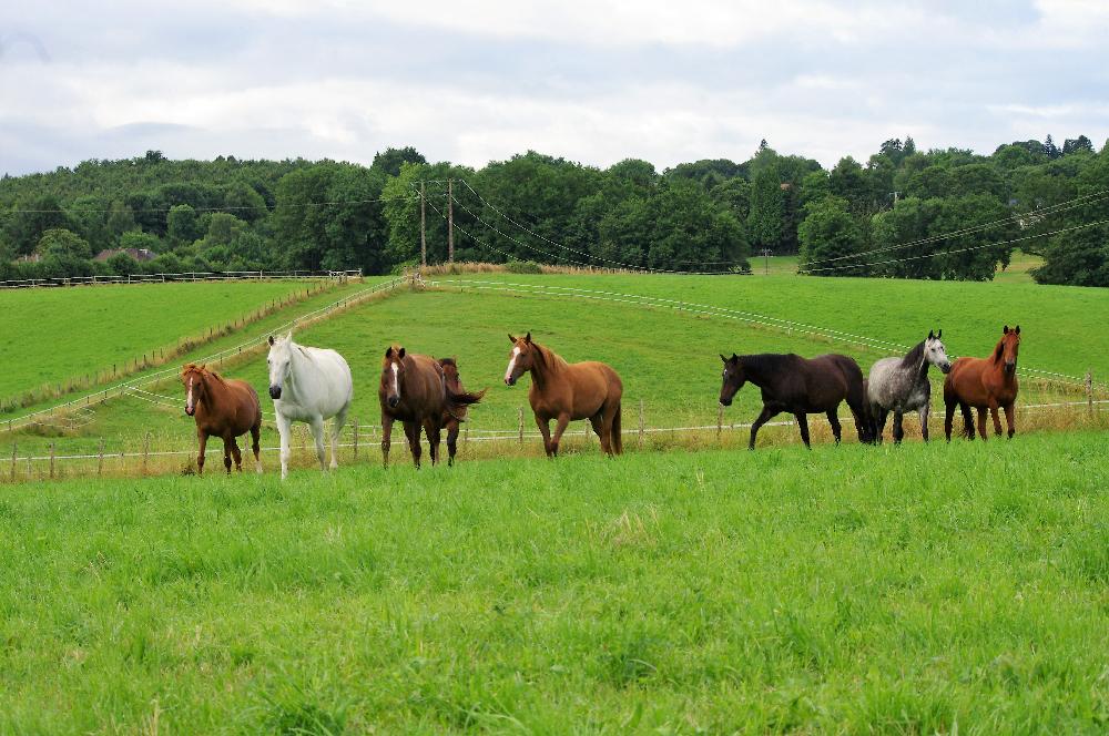Rénovation des prairies pour les chevaux