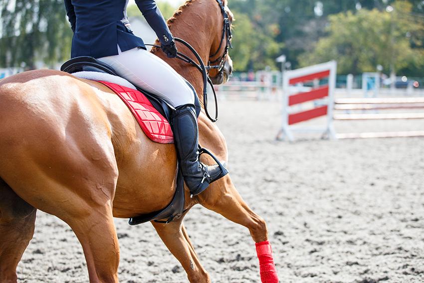 Filière équine belge