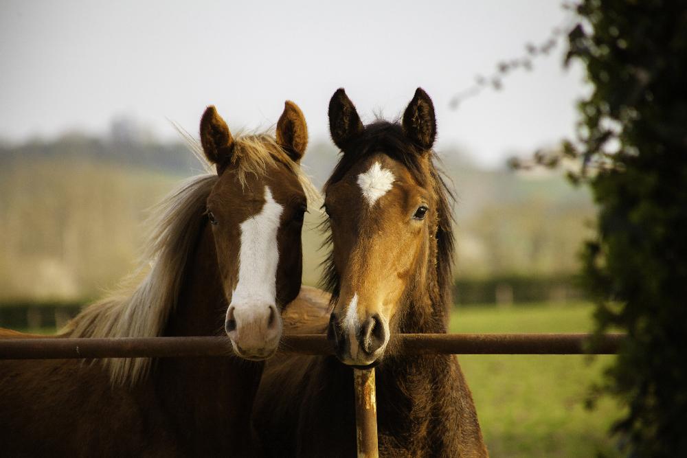 Prix des chevaux en France