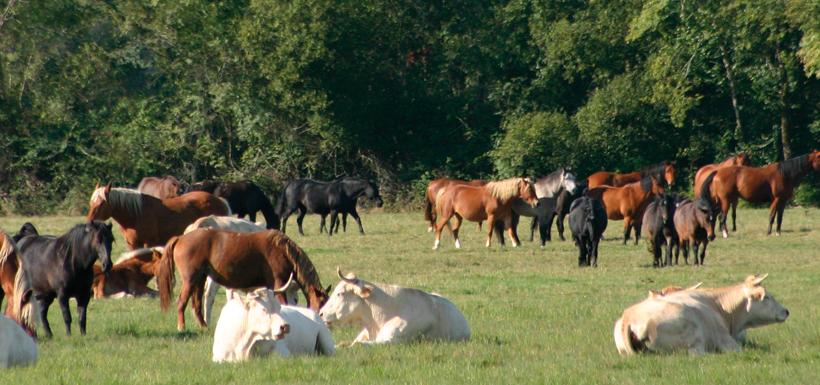 La nouvelle politique agricole commune 2014-2020