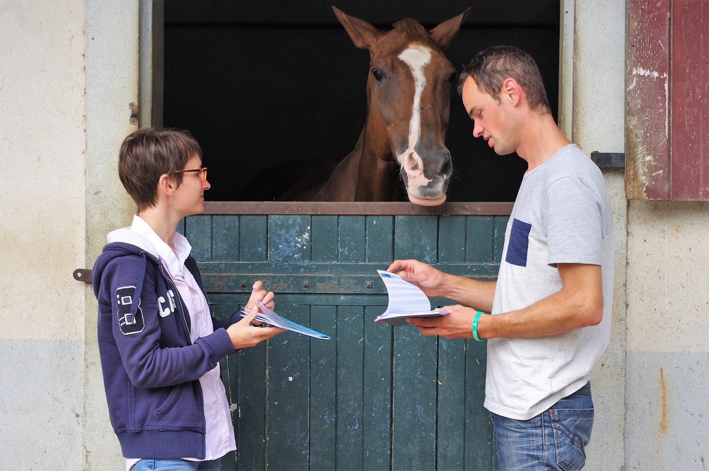 Des conseils pour acheter son cheval