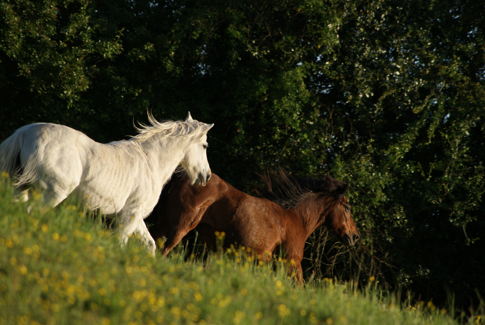 Entretenir un cheval d'âge : combien ça coûte ?