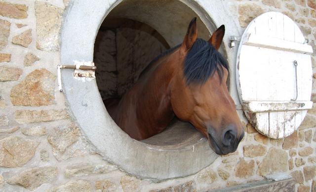 Logement du cheval et bien-être