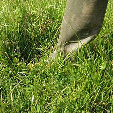 Utilisation of grass at the correct stage for horses