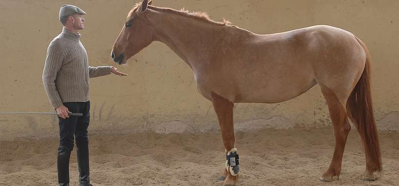 intervenant en équitation éthologique