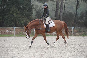 fonctionnement du dos du cheval