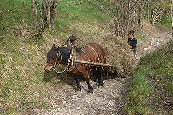 Transport du foin par un cheval Castillonnais dans une zone difficilement mécanisable