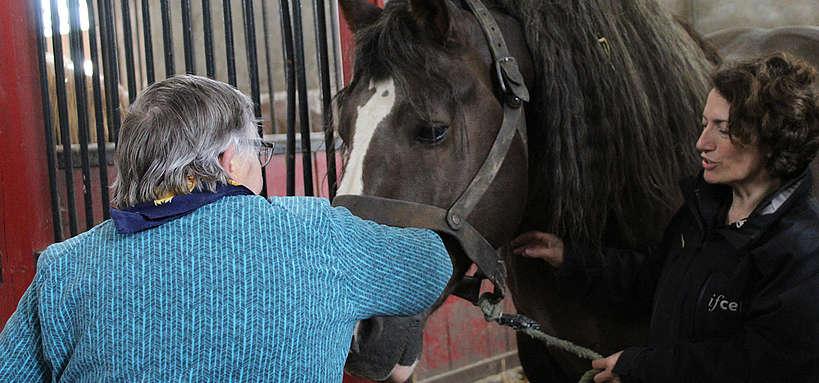 Activités assistées par le cheval pour personnes âgéesActivités assistées par le cheval pour personnes âgées en perte d'autonomie