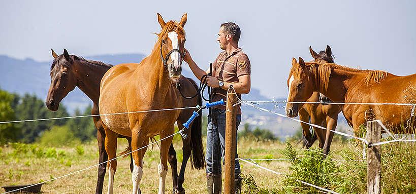 Eleveur et ses chevaux au pré