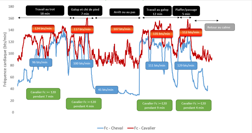 Graphique 2 - Enregistrement de la fréquence cardiaque d'un cavalier et de son cheval à l'entraînement en dressage. Sur une séance encadrée de 1h05, cette cavalière de Grand Prix est au-dessus de 120 bts/min pendant 24 min.