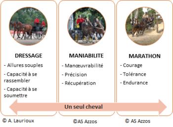 Qualités du cheval d'attelage athlète