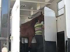 pathologie équine liée au transport