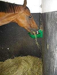 cheval buvant de l'eau au dessus d'un tas de foin