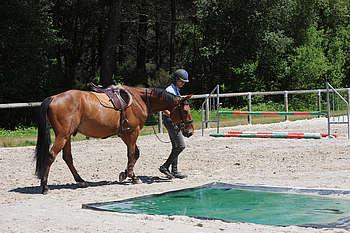 Cavalier montrant une bâche à son cheval à pied