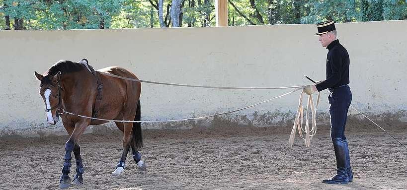 éducation du jeune cheval