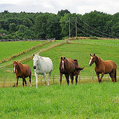Renovating horse pastures