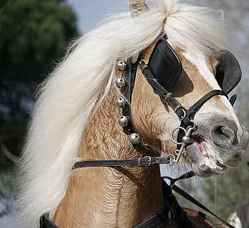 émotions chez le cheval