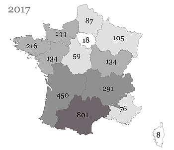 Les poulains Arabe nés en France et immatriculés