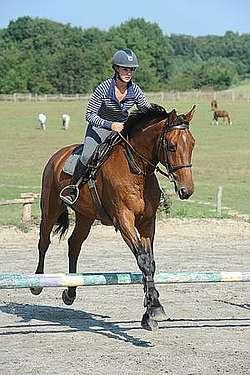 Equitation élémentaire du cavalier débutant © A. Laurioux