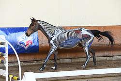 Appui du diagonal droit galop à gauche cheval peint