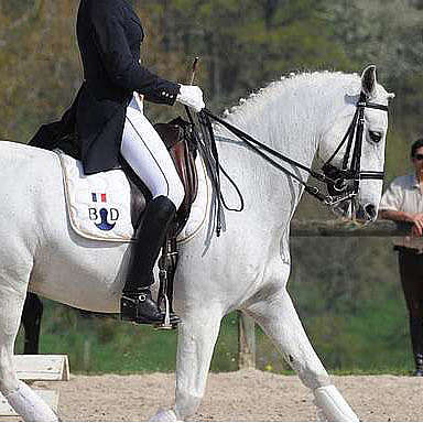 Directory of dressage sessions