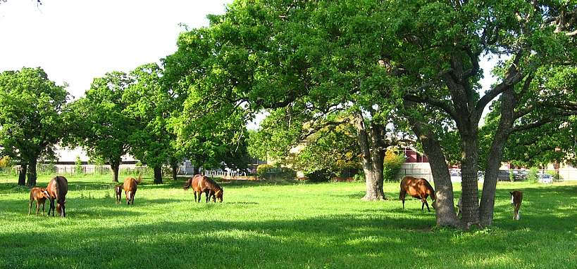 Chevaux Quarter Horse
