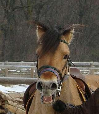 communication chez le cheval