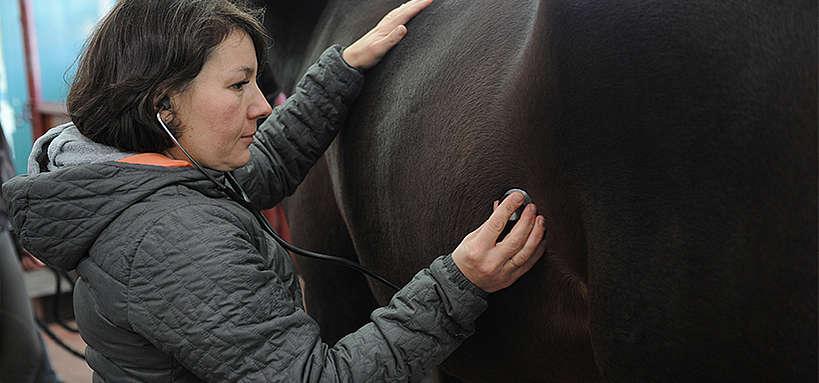 maladie du cheval : auscultation