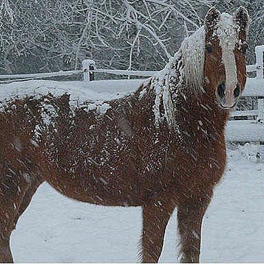 Wintering animals