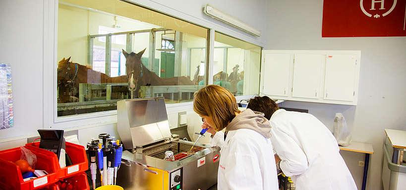 laboratoire jumenterie
