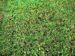 Compost épandu sur prairie (15 tonnes/ha)