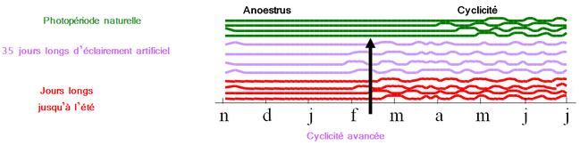 Cyclicité liée à la lumière