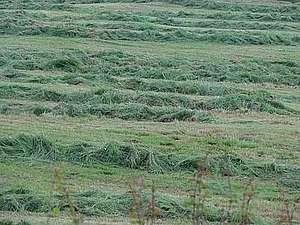 Fauche de l'herbe avec une faucheuse-conditionneuse