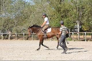 périodes clés de la vie du jeune cheval