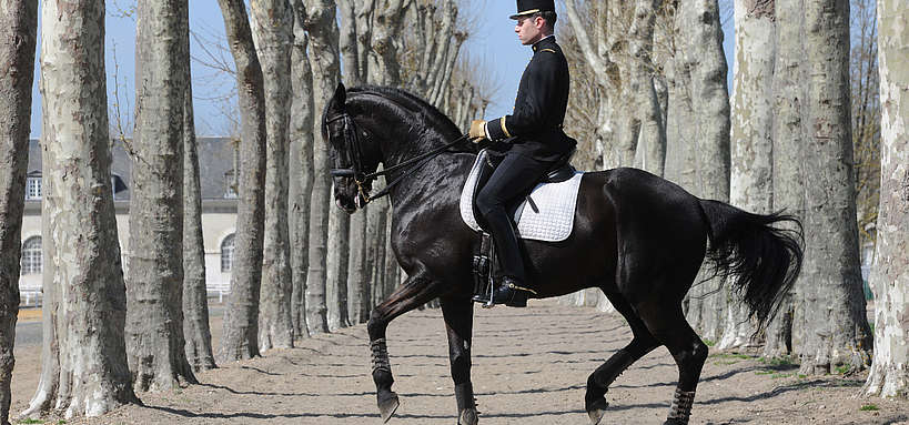 Rassembler cavalier du Cadre noir © Ifce